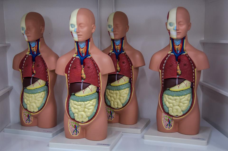 Parte das peças que serão usadas para as aulas do curso de Medicina |Foto: Eduardo Mendonça/Assecom/Ufersa