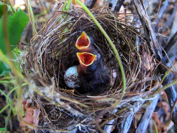 Aves encontradas nas últimas capacitações da Ecoando / Foto cedida